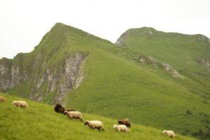 Bergerie de Chandossel - Ballachaux